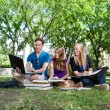Stock Photo: Teenagers studying on campus lawn