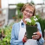 Senior woman holding flower pot — Stock Photo