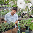 Man buying potted plants — Stockfoto