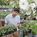人在买盆栽的植物 — 图库照片