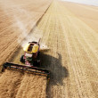 Stock Photo: Aerial View of Harvest in Field