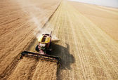 Aerial View of Harvest in Field — Stock Photo