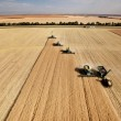 Aerial View of Harvest - Stock Photo