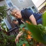 Senior women gardening — Stock Photo