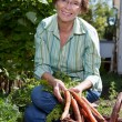 Stock Photo: Woman harvesting carrots