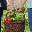 Women holding basket filled with vegetables — Stock Photo