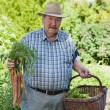 Senior Man with Basket of Vegetables — Stock Photo