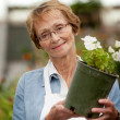 Senior Woman Holding Potted Plant - Stock Photo
