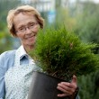 Senior Woman Employee with Shrub — Stock Photo