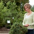 Attractive female purchasing shrub - 