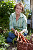 Woman harvesting carrots — Stock Photo