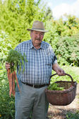 Senior Man with Basket of Vegetables — Stockfoto