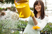 Attractive Female Watering Plants — Stock Photo
