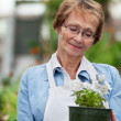 Senior woman holding potted plant — Stock Photo #7410634