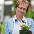Royalty-Free Stock Photo: Senior woman holding potted plant