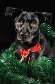 Dovolená pes — Stock fotografie