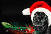 Lindo perro negro con un sombrero de santa — Foto de Stock
