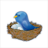 Blue bird sitting in the nest — Stock Photo