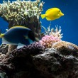 Aquarium with fish and corals — Stockfoto