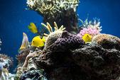 Aquarium with fish and corals — Stock Photo