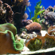 Aquarium with fish and corals - Stock Photo