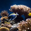 Aquarium with fish and corals — Foto Stock