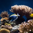 Aquarium with fish and corals — 图库照片