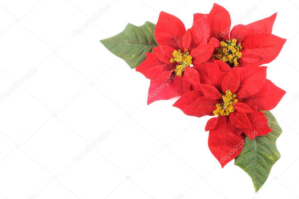 Flor de nochebuenas foto de stock 7384343 depositphotos - Imagenes flores de navidad ...