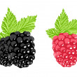 Vector berry — Stock Vector