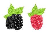 Vector berry — Stock Vector