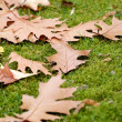 Scattered Autumn Leaves On Grass Seasons — Stock Photo