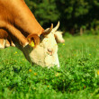 Cow on green summer meadow - Lizenzfreies Foto