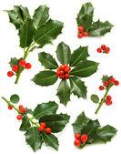 Boże narodzenie holly zestaw - zielony liść, czerwone jagody i gałązka — Zdjęcie stockowe