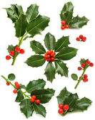 Christmas holly set - green leaf, red berry and twig — ストック写真