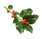 Green Christmas holly isolated — Stock Photo
