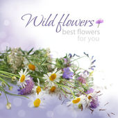 Floral background - flowers, birthday gift — 图库照片
