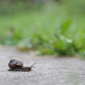 Snail on green foliage background — Stock Photo