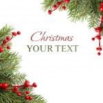rama de un árbol verde Navidad en blanco - fondo de Navidad — Foto de Stock
