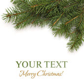 Christmas tree branch on white background — Stock Photo