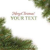 Christmas border - Xmas tree branch isolated — Stock Photo