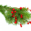 图库照片: Christmas green branch with red berry isolated