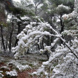 Frozen branches winter in a forest -  