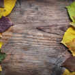 Autumn Leaves — Stock Photo #7404269