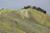 Uma colina à beira-mar — Foto Stock