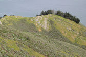 海沿いの丘 — ストック写真