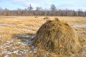 干し草 — ストック写真