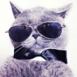 Portrait of British shorthair gray cat wearing sunglasses — Stock Photo #7101384