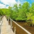 Mangroves — Stock Photo #7860506