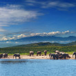 Elephants in african savanna — Stock Photo