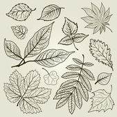 Vector set of autumn leafs illustration — Stock Vector